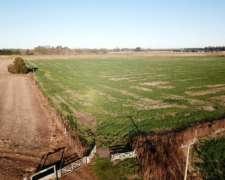 Lobos, Buenos Aires Chacra 52 Has Agrícolas Vendido