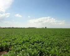 Sastre Santa FE. Tambo 300 Has. 100 % Agrícolas DS 7500/ha