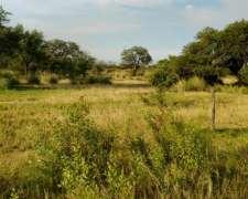 Alquiler Campo San Cristobal - Huanqueros - 1250 Has
