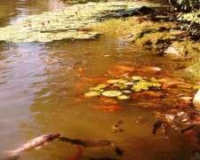 Lagunas, Estanques y Canteras Siembra y Saneamiento