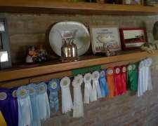 Toros Jersey Puro Pedigree - Cabaña Pura Vida