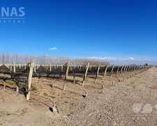 61 Has. Finca con Viñedos en Cordón del Plata en Tupungato