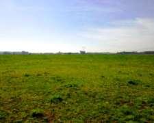 Ba2762 Venta Agricola 130 Has Monte, Buenos Aires