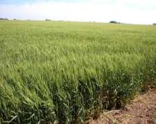 Campo en Venta en San Antonio de Areco. 150 Has. Agricola