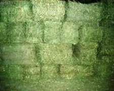 Fardos de Alfalfa Excelente Calidad en San Rafael Mendoza