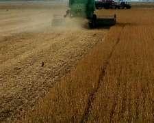 Peón General Tractor y Hacienda