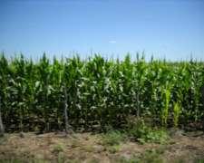 Entre Rios,vendo Hernandarias 830 Has Agricolas