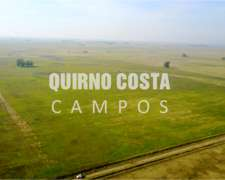 Quirno Costa Campos Vende Estancia Mixta en Suipacha 83 Has