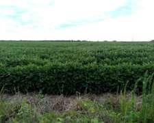 Vendo/alquila Campo Aptos para Agricultura