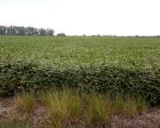 50 Has Agrícolas Exclusivas Arroyo Aguiar S/RP2 Asfaltada