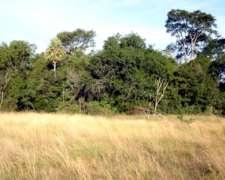 Vendemos 500 Ha de Monte en Chaco