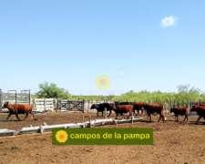La Pampa - Campo Ganadero de 30.000 Ha - Oportunidad