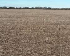 167 Has Agrícolas en Larroque Entre Ríos