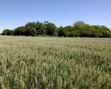 140 Has Agrícolas Sobre Ripio. Almada, Gualeguaychú.
