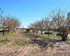 Cruz del Eje - 530 Has.- Mixto -