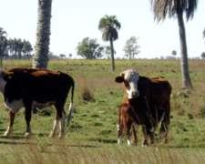 Vendo Campo en Corrientes