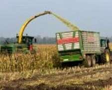 Compramos Granos Cereales: Trigo,soja,sorgo,maiz