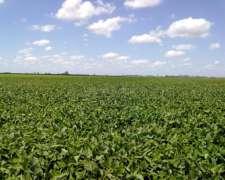 Buscamos 100 Ha Agrícolas en Zona Núcleo. Res. Inmediata