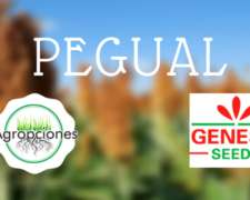 Semilla de Sorgo Pegual - Semillero Genesis