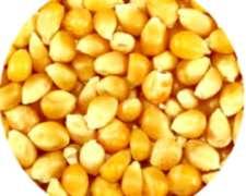 Compro Maiz, Soja, Trigo Y Girasol