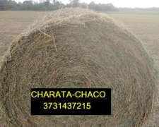 Rollos de Alfalfa - Campos del Oeste Alfalfa