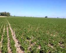 Gran Oportunidad,campo Agrícola Consulte sin Compromiso