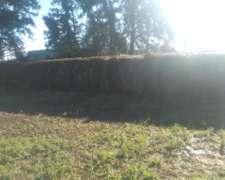 Rollos de Alfalfa en Venta