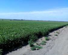 Calamuchita Hermoso Campo Agricola