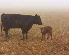Feedloot, A Porcentaje, Hoteleria De Vacas
