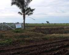 Atención Salto Grande, 17 Has Agrícolas Cerca del Pueblo