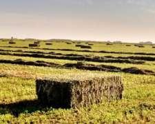 Megafardos De Alfalfa De Buena Calidad A $ 3.70 El Kg