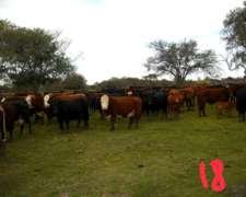 Vacas CUT Preñadasuy Buenas