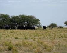 Vendo Campo en Abramo, Prov. de la Pampa