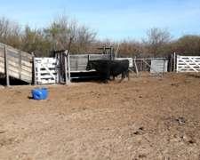 Vendo Campo de Cria en San Luis