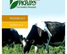 Alfalfa Queen 910 (grupo 9) - Semillas Picasso