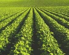 440 Has Agricolas, Alsogaray, San Luis