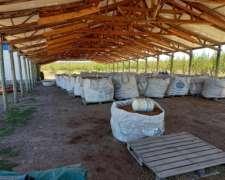 Finca Productora de Almendra Peladas. Costa Rio Colorado