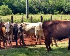 25 Vacas Invernada - Corrientes. Solo Interesado Directo