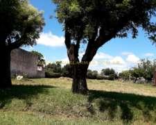 Terrenos en Abbott - Casco Urbano - Excelente Ubicación