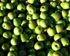 Vendo Fruta De Industria, Manzana, Pera, Membrillo, Zapallo