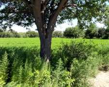 Campo de 1500 Has. Ganadero en Cruz del Eje Córdoba