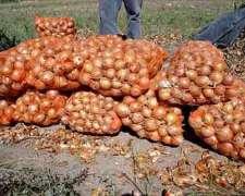 Vendo Cebolla De Rio Negro