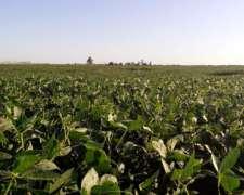 Campo Agricola en Hegusquiza