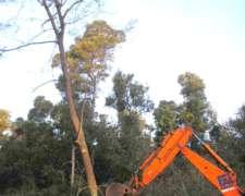 Desmonte de Malezas en Campos 2241674884