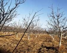 Nogales 8ha + Viñedos 2ha Famatina y Guanchin - la Rioja