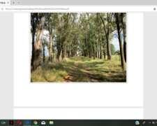 Excelente Campo Agricola-ganadero-forestal en Zona Nucleo.