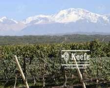 Finca Premium de Altura en Mendoza