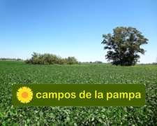 La Pampa - Venta 25 Ha Cultivables - en Quemu Quemu