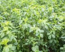 Venta Fardos y Semilla de Alfalfa a Malacate Sgo. D. Estero