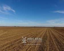 Campo Agrícola Zona Blaquier-ameghino